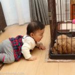 生後9ヶ月[40週目]:友人と久しぶりの再会。娘は犬に大興奮!
