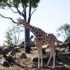 生後7ヶ月[32週目]:初めての動物園。ズーラシアへ